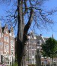 Dagjeinamsterdam-Hofjes-11-71a84fe394e468feacb7f877042d2f48